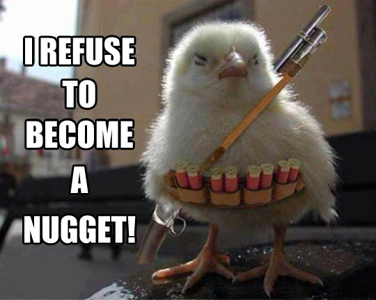 funny-chick-weapon-shell-fighting1